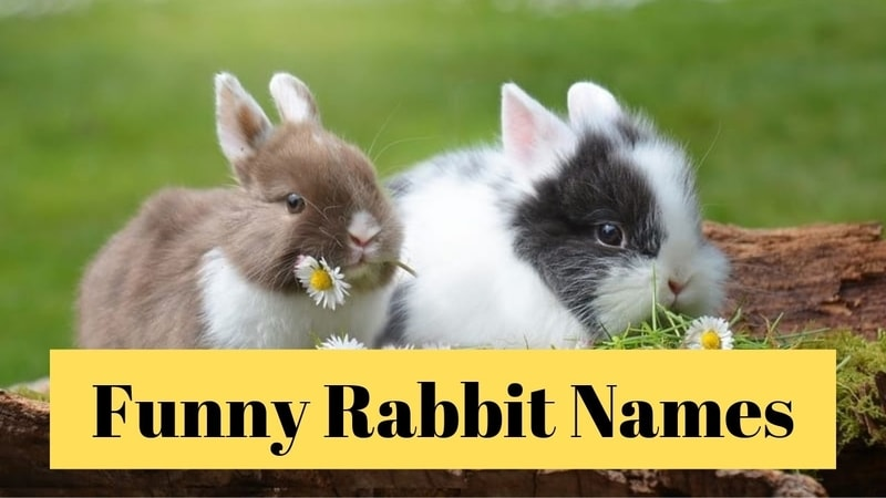 Funny Rabbit Name