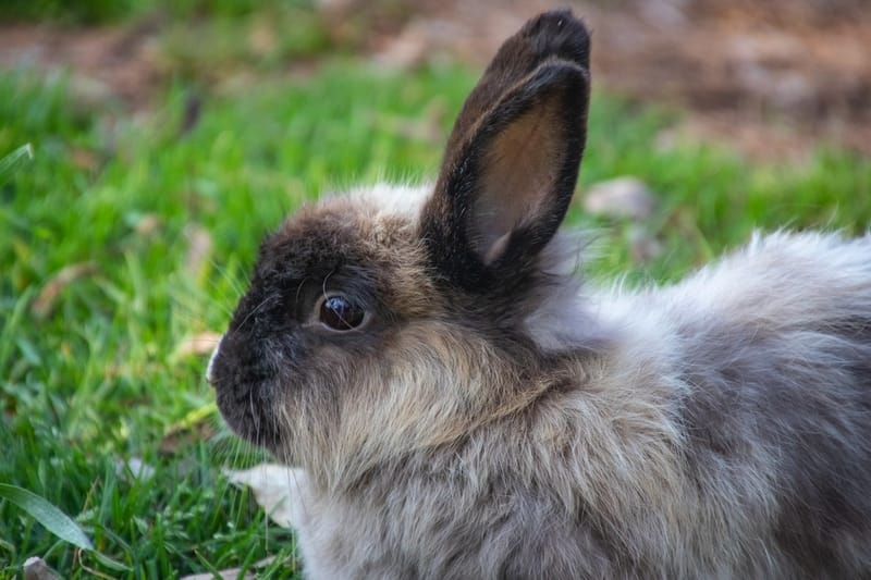 Rabbit Name for Male
