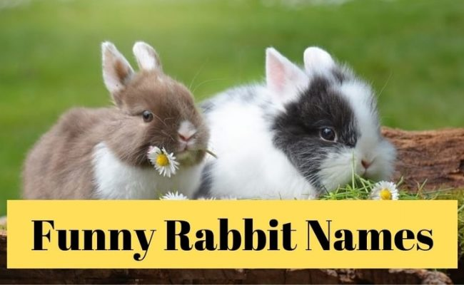 110 Cute and Funny Rabbit Names