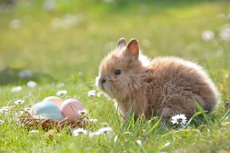 Rabbit Names for Female