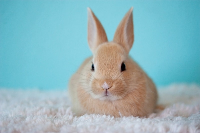 Funny Rabbit Names for Male