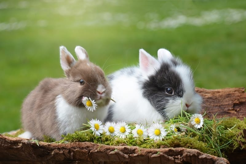 Rabbit Names for Pairs